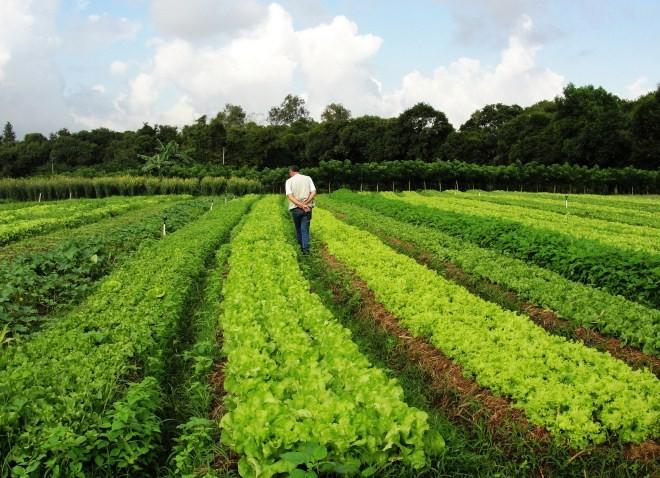 [evento: sistemas-agroecologicos-de-producao] - 01.jpg