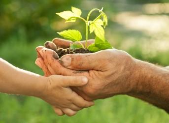 [noticia: cidades-verdes-educacao-para-o-desenvolvimento-sustentavel] A educação ambiental é um dos pilares do desenvolvimento sustentável (Foto: Reprodução) - educação-ambiental-2.jpg