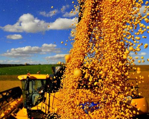 [noticia: caixa-amplia-para-r-12-bilhoes-a-oferta-de-credito-agricola] Goiás é um dos estados no ranking da produção - Colheita-de-soja.png